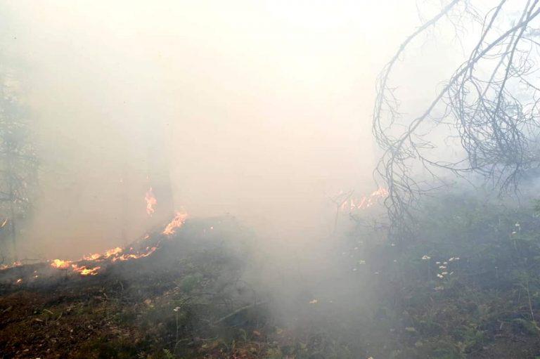 Son dakika haberi   Gümüşhane de orman içi örtü yangını korkuttu